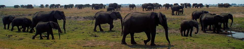 largest herds of elephants on earth